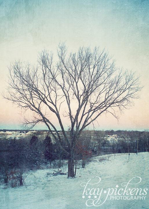 Lone Elm tree